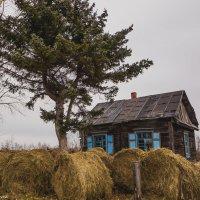 Домик в деревне, сеном запаслись! :: Ирина Антоновна
