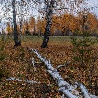 Золотые оттенки осени... :: Владимир Хиль