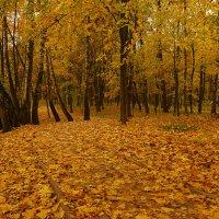 Осенняя :: Alex