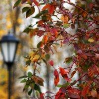 Ещё осень... :: Ирина Румянцева