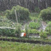 Летний дождь :: Tatyana Kuchina