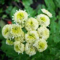 Цветы осени :: татьяна