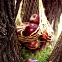 Яблоко от яблони :: Екатерина Кононенко