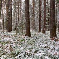 Таинственный лес :: Юрий Михайлов
