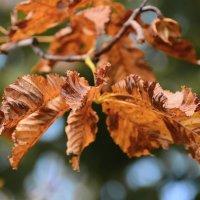 Осенняя охра. :: Paparazzi