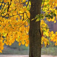 Осень,осень..... :: Paparazzi