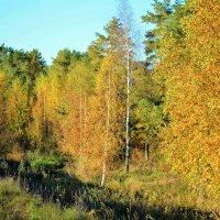 Осенний лес. :: Новиков Игорь