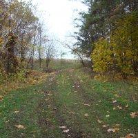 Лес в октябре :: марина ковшова