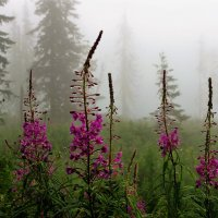 Утром на поляне роса :: Сергей Чиняев