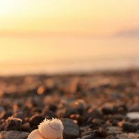 Пляж :: Ирина ***