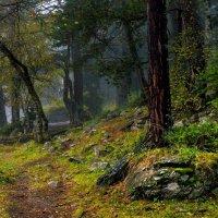 Туманная осень :: Скан