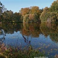 Прудик в парке :: Dmitry Swanson