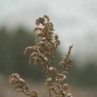 Осень - это маленькая смерть :: Дмитрий Костоусов