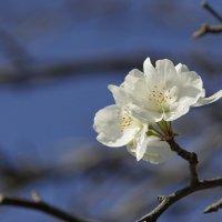 октябрь, яблони цветут) :: Эдуард Куклин