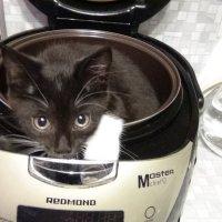 Есть суп из топора, а у меня из кота :: Ирина Арефьева