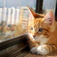 солнечный кот :: Екатерина и Иван Гирда