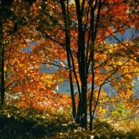 Багряная осень :: Сергей Тарабара