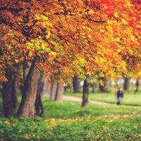 Осень в парке Александрия. :: Юрий