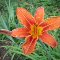 Оранжевая звезда :: Дмитрий Никитин