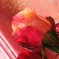 Красавица в капельках :: Лидия (naum.lidiya)