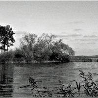Залив :: Михаил Цегалко