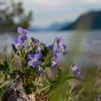 цветок :: Наталья Буданова
