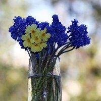 О далёкой весне... :: Ирина Румянцева