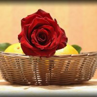 роза :: galiyalex .