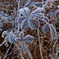 Заморозки :: Сережка Фантом