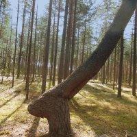 Дерево в лесу. :: Татьяна