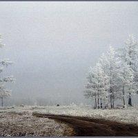 в зимнем наряде :: Евгений Кокухин