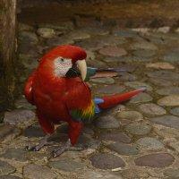 Питомцы Перу :: Svetlana Galvez