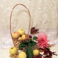 Осенние яблоки. :: Инна Щелокова