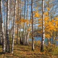 Золотая осень в парке 2 :: Виталий