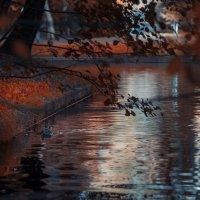 Осенний парк :: Михаил Александров