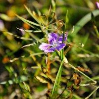 Маленький цветок. :: владимир