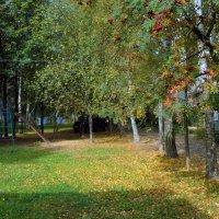 Осень золотая. :: Sergey Serebrykov