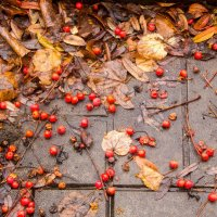 Осень :: Ольга Лапшина