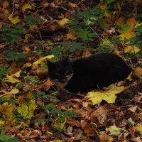 Парковая кошка :: Андрей Лукьянов