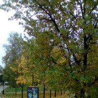 Осенний перекресток. (Александровский парк). :: Светлана Калмыкова