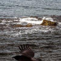 Полёт птицы :: Aleks Ben Israel