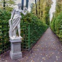 Летний сад. Санкт-Петербург :: Алексей Михалев
