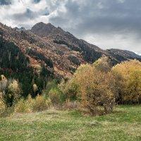 Осень в ущелье Гоначхир :: anatoly Gaponenko