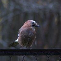 Птица :: Aнна Зарубина