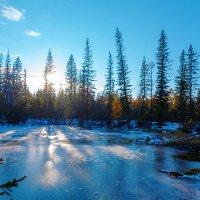Вечер в еловом лесу :: Анатолий Иргл