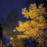 Осенний вечер в Молочном :: Валерий Талашов
