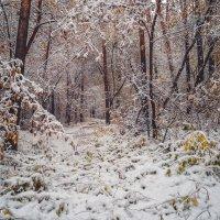 Начало зимы :: Егор Балясов