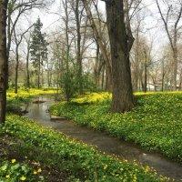 Весенние цветы :: Наташа Федорова