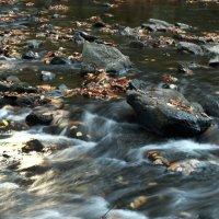 Камни,листья,вода :: Leha F