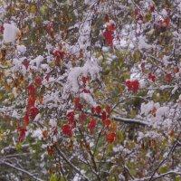 Первый снег---16 :: Владимир Холодный